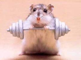 weight-lifting-hamster